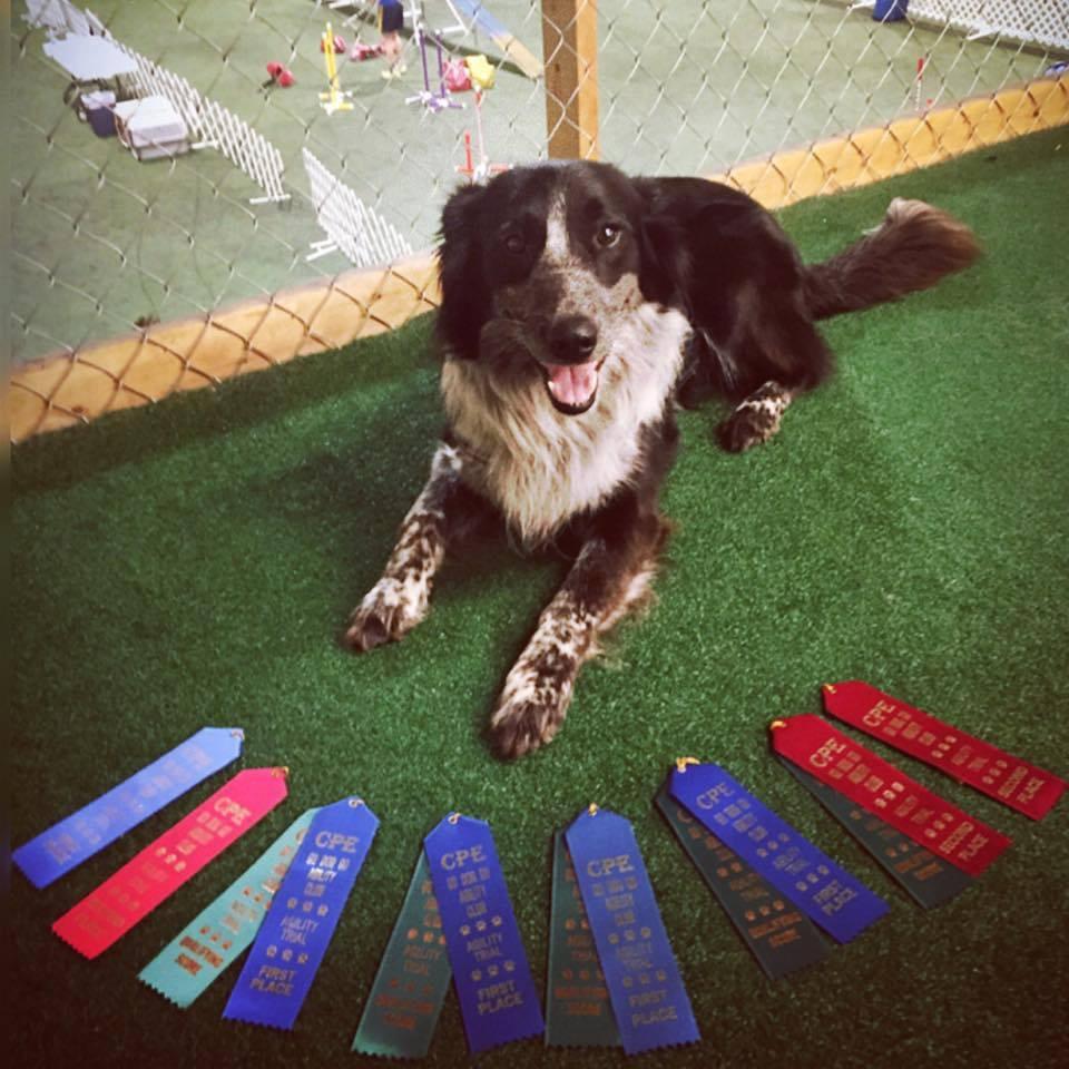 chris miara lexington best dog training