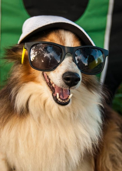 lexington canine good citizen class CGC