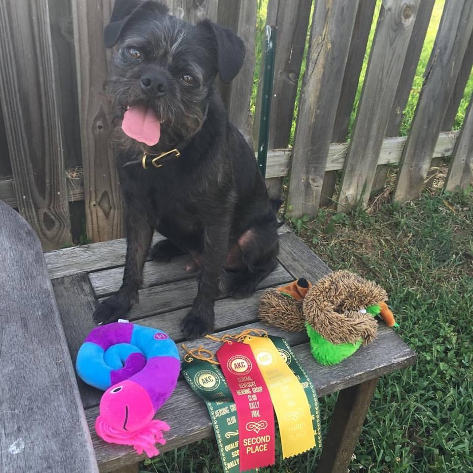 lexington rally AKC obedience dog training class