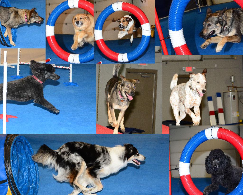 lexington best dog agility classes in kentucky