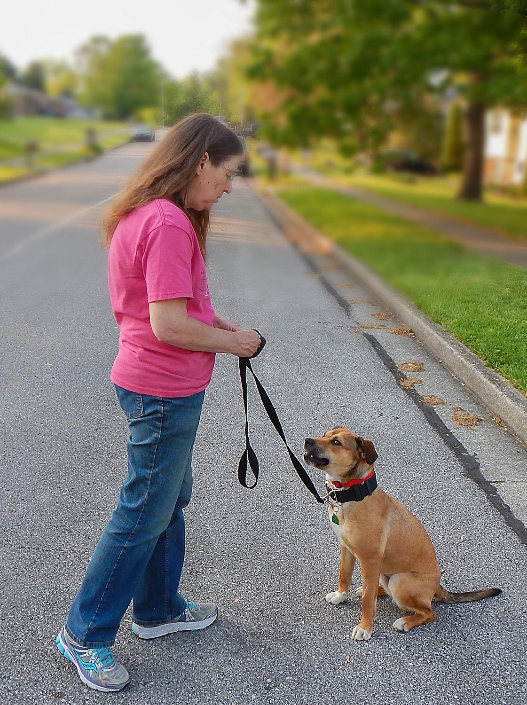 lexington dog day training