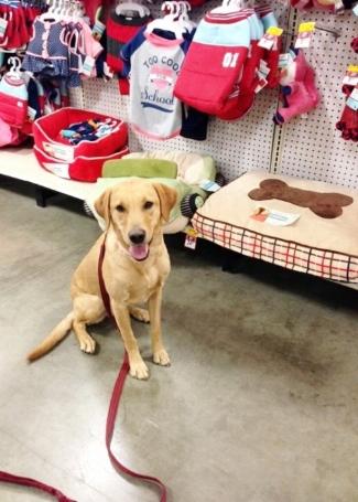 city canine class lexington pet store dog training