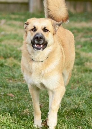 positive reinforcement dog training in lexington