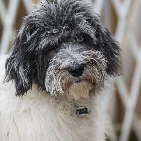 lexington best dog trainer