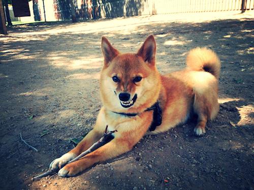 dog aggression lexington aggressive dog
