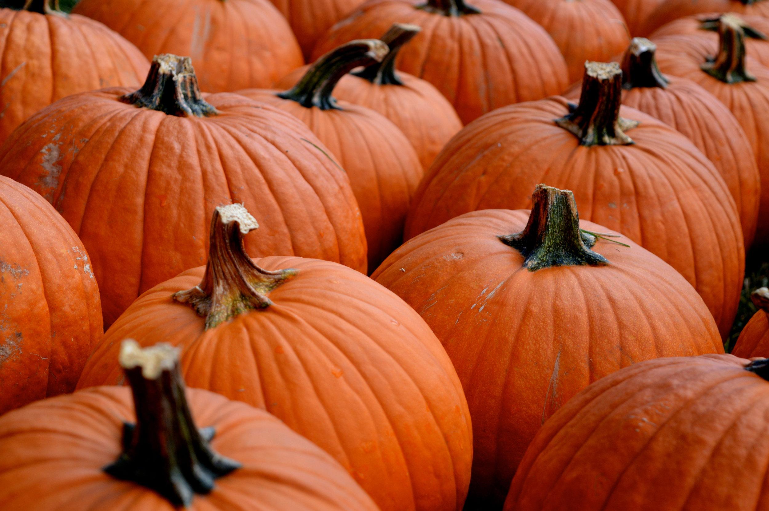 Pumpkin Patch Aurora 10.jpg