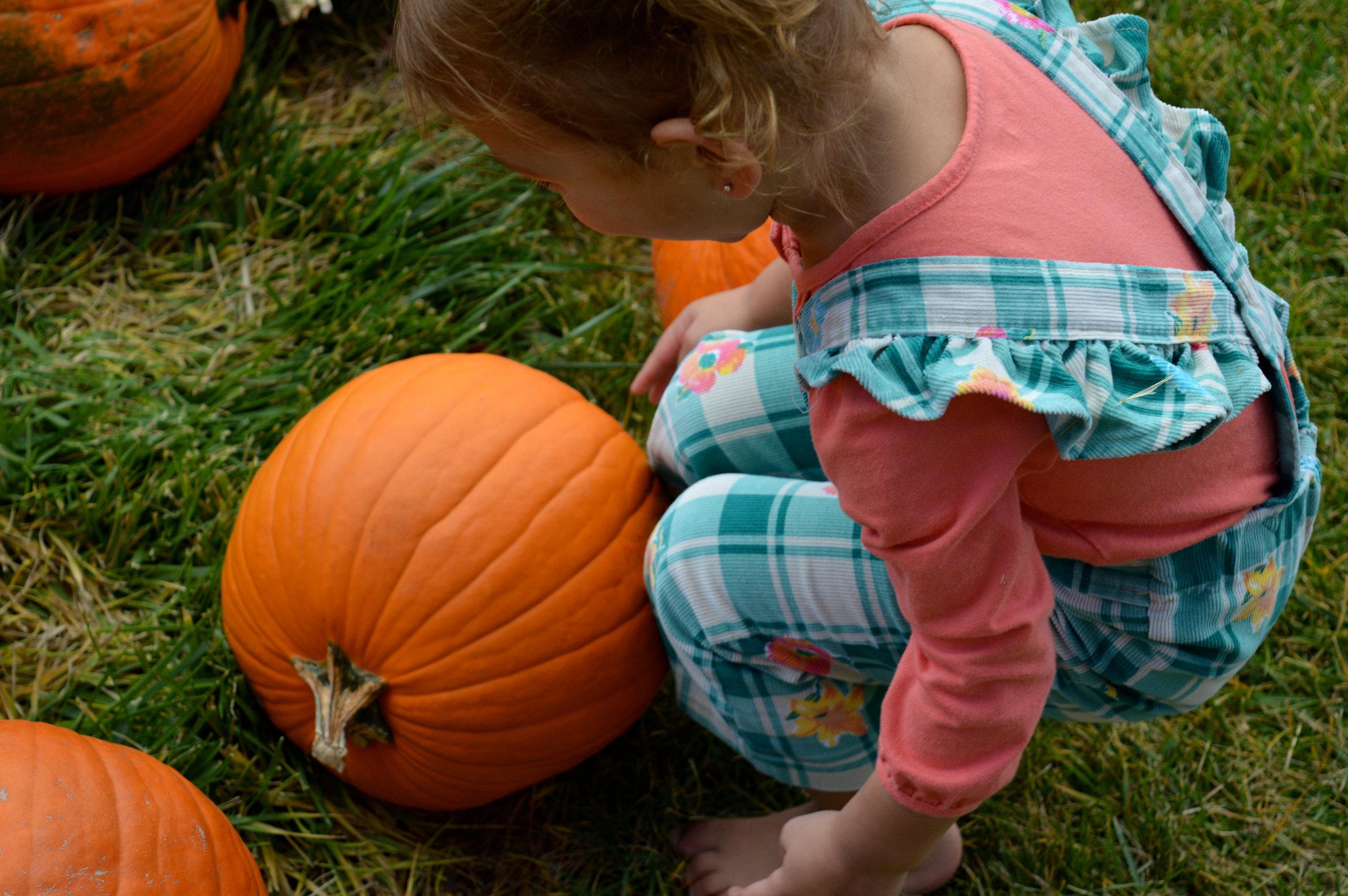 Pumpkin Patch Aurora 12.jpg
