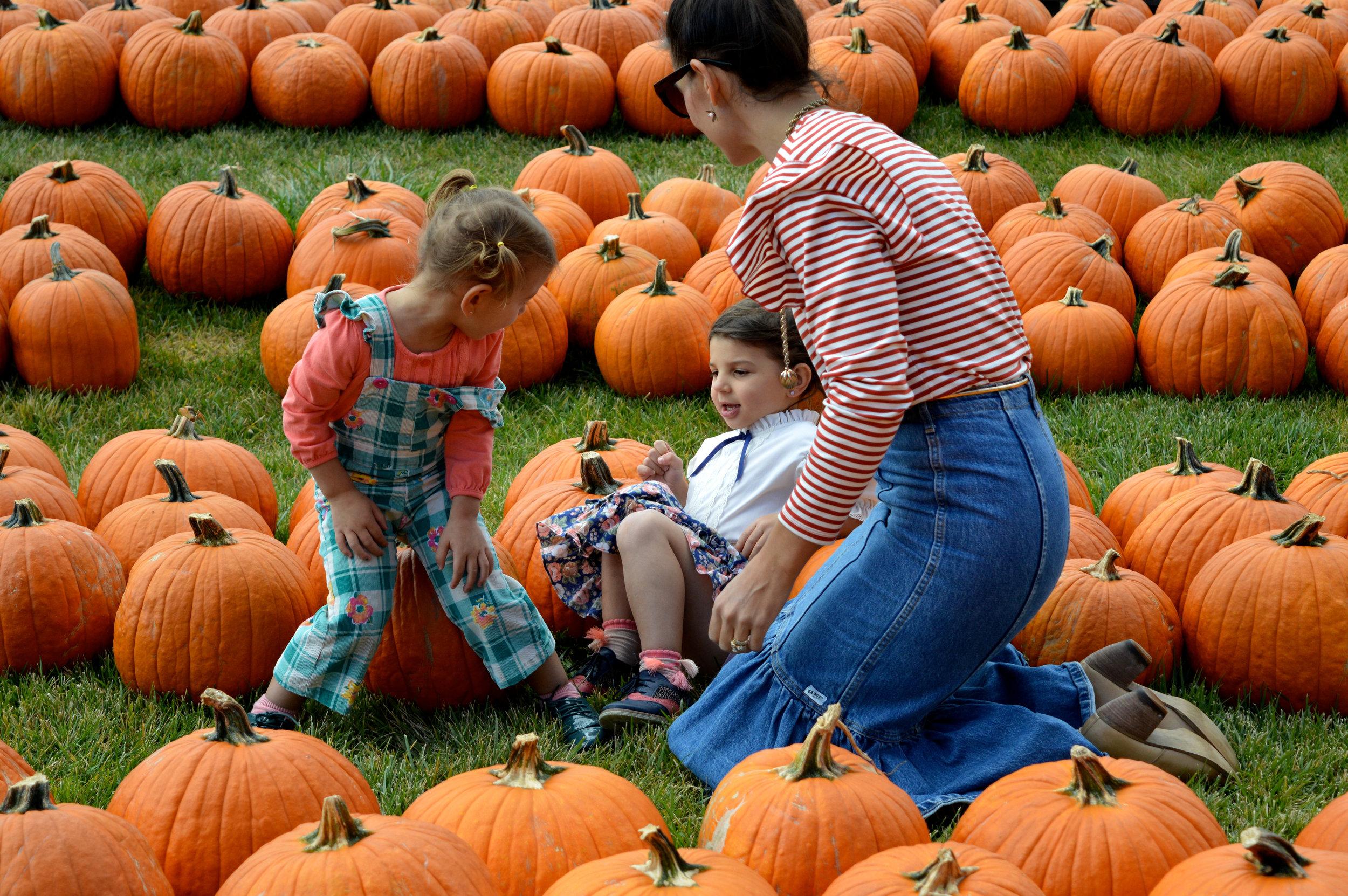 Pumpkin Patch Aurora 13.jpg