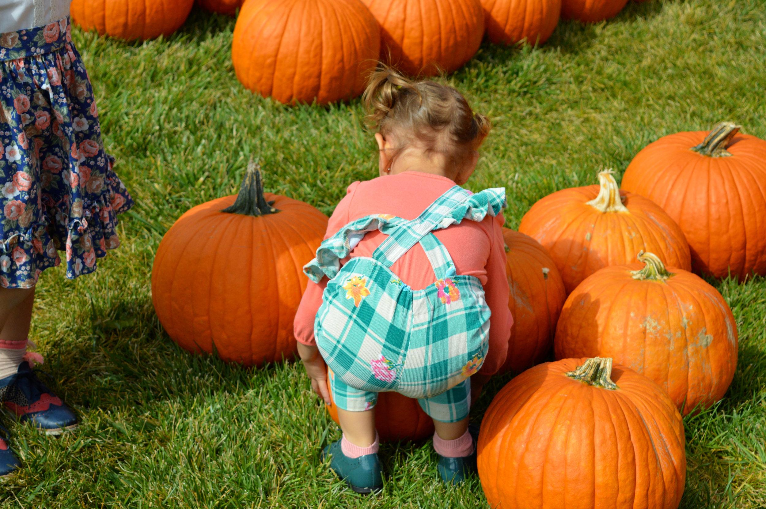 Pumpkin Patch Aurora 20.jpg