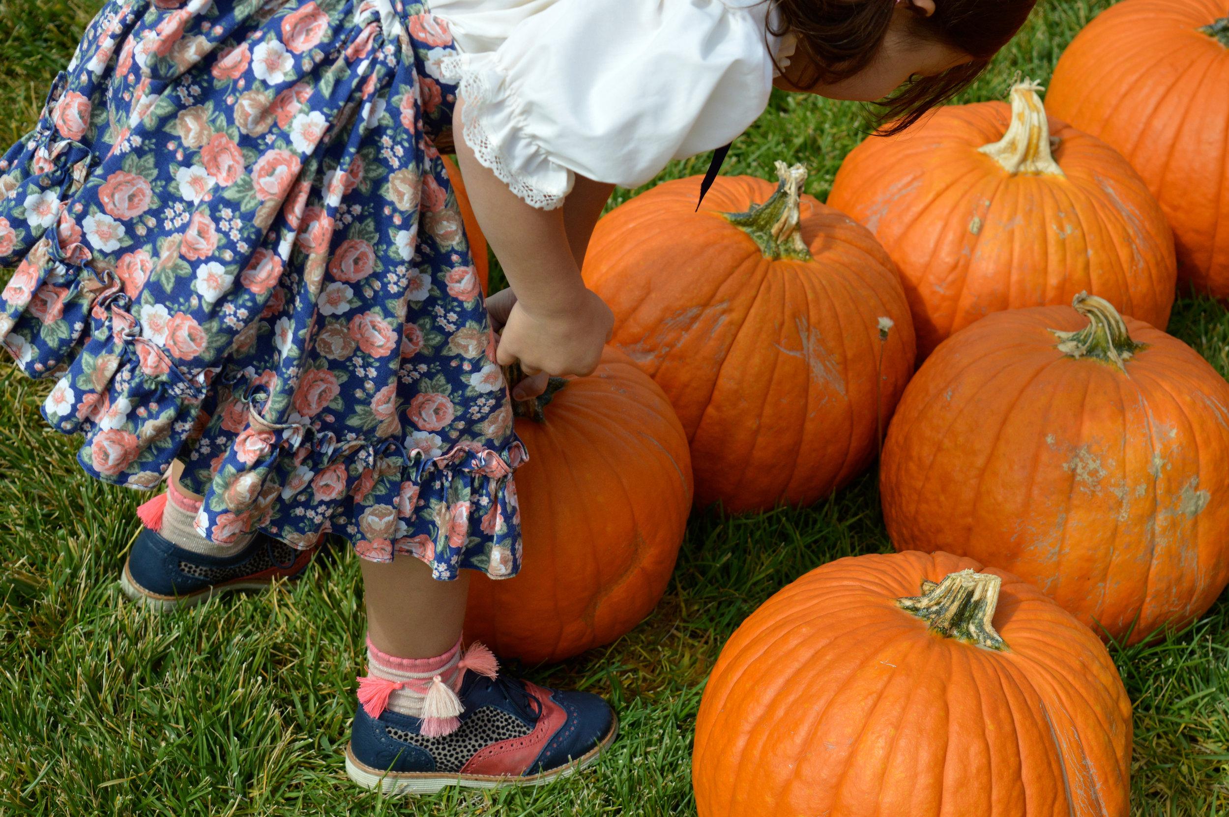 Pumpkin Patch Aurora 22.jpg