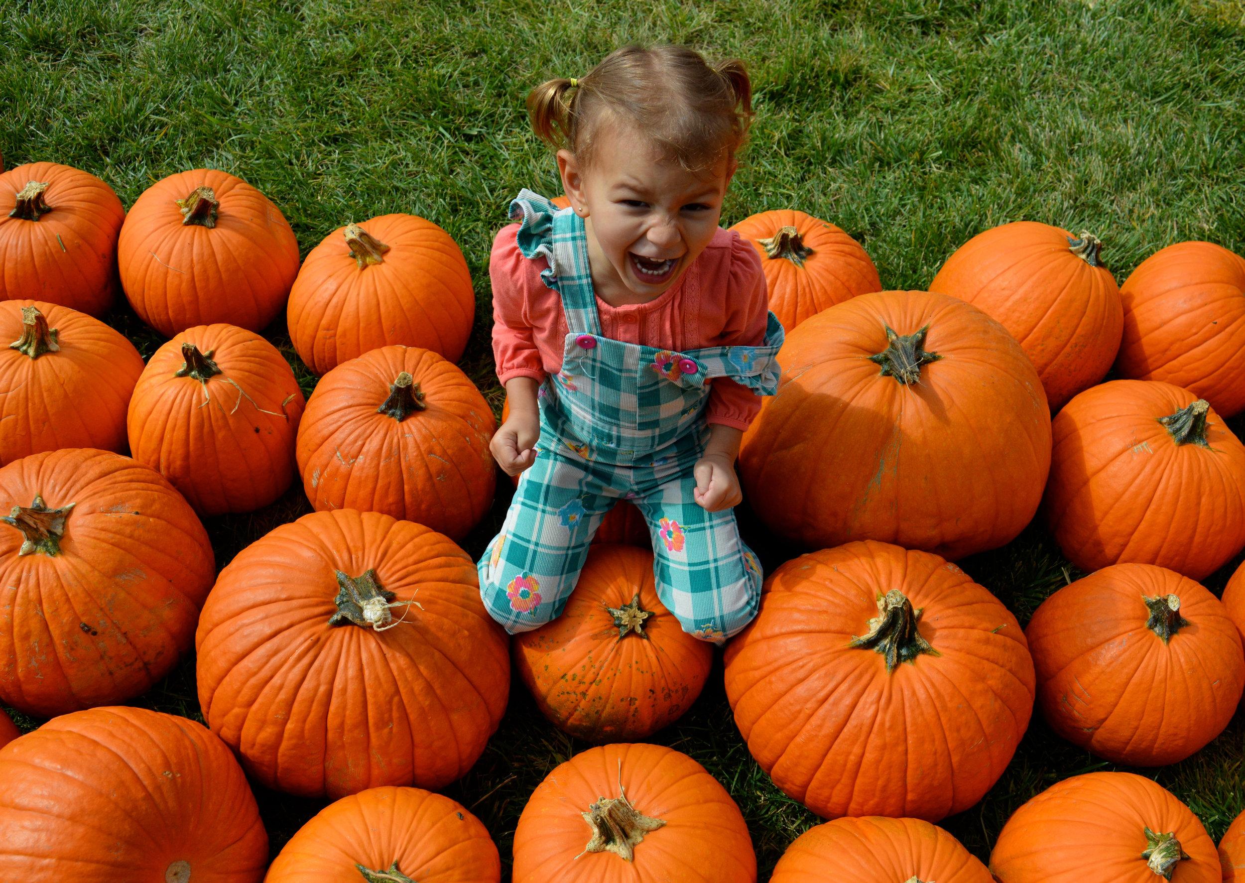 Pumpkin Patch Aurora 23.jpg