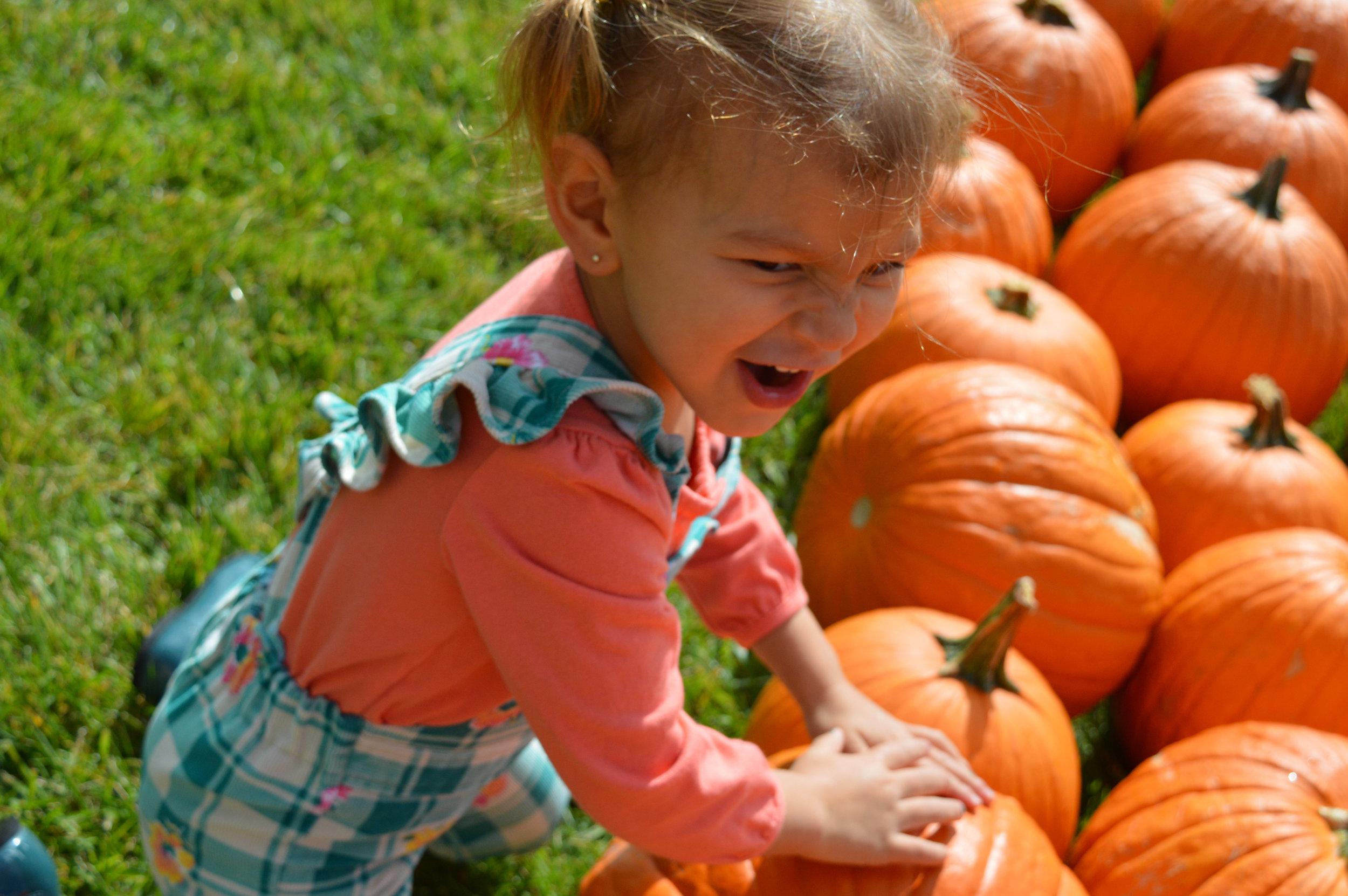 Pumpkin Patch Aurora 26.jpg