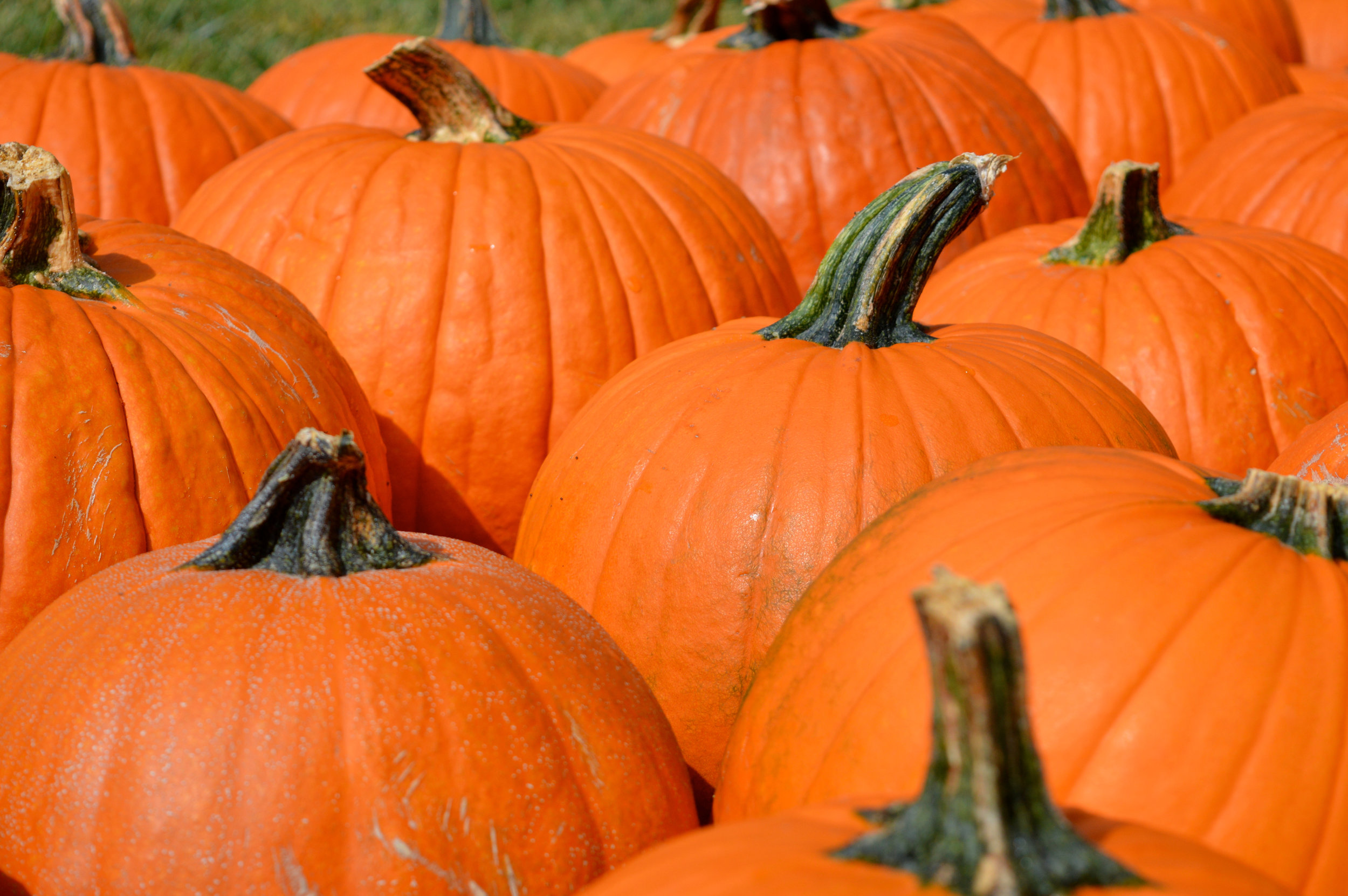 Pumpkin Patch Aurora 27.jpg
