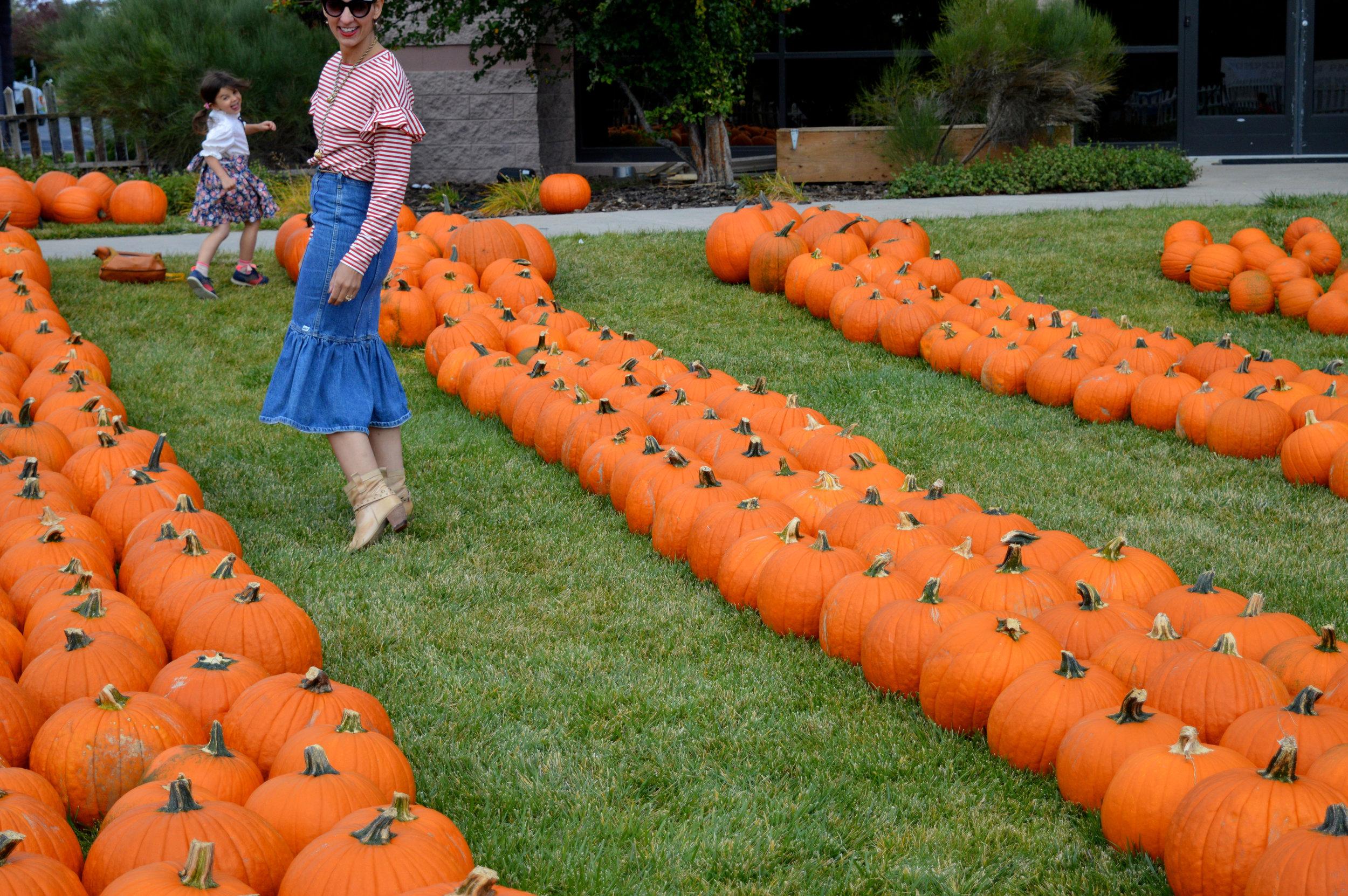 Pumpkin Patch Aurora 32.jpg