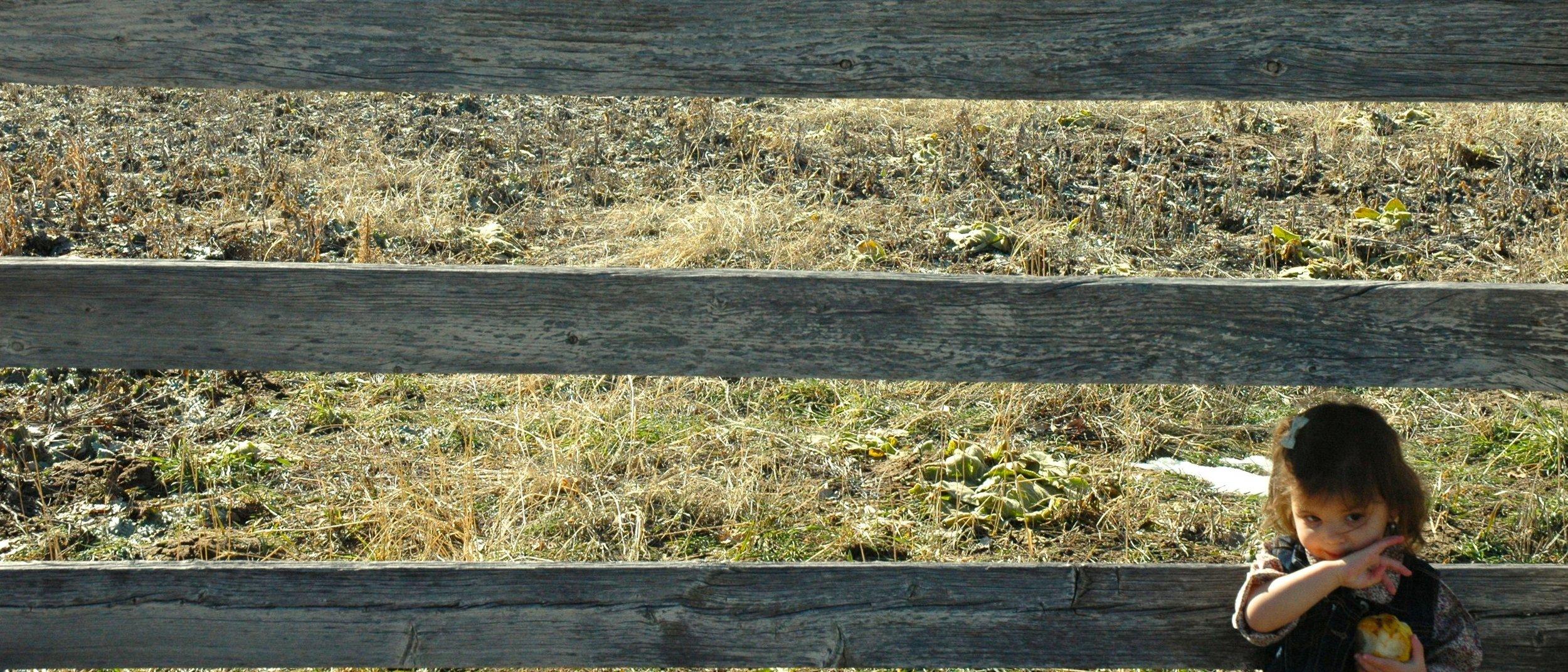fence-wipe-pear-juice.jpg