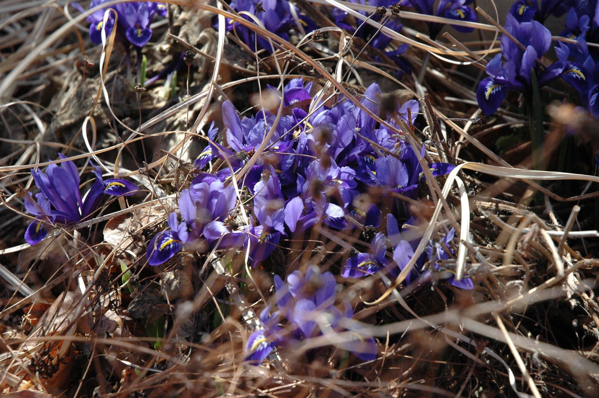 garden-dark-purple.jpg