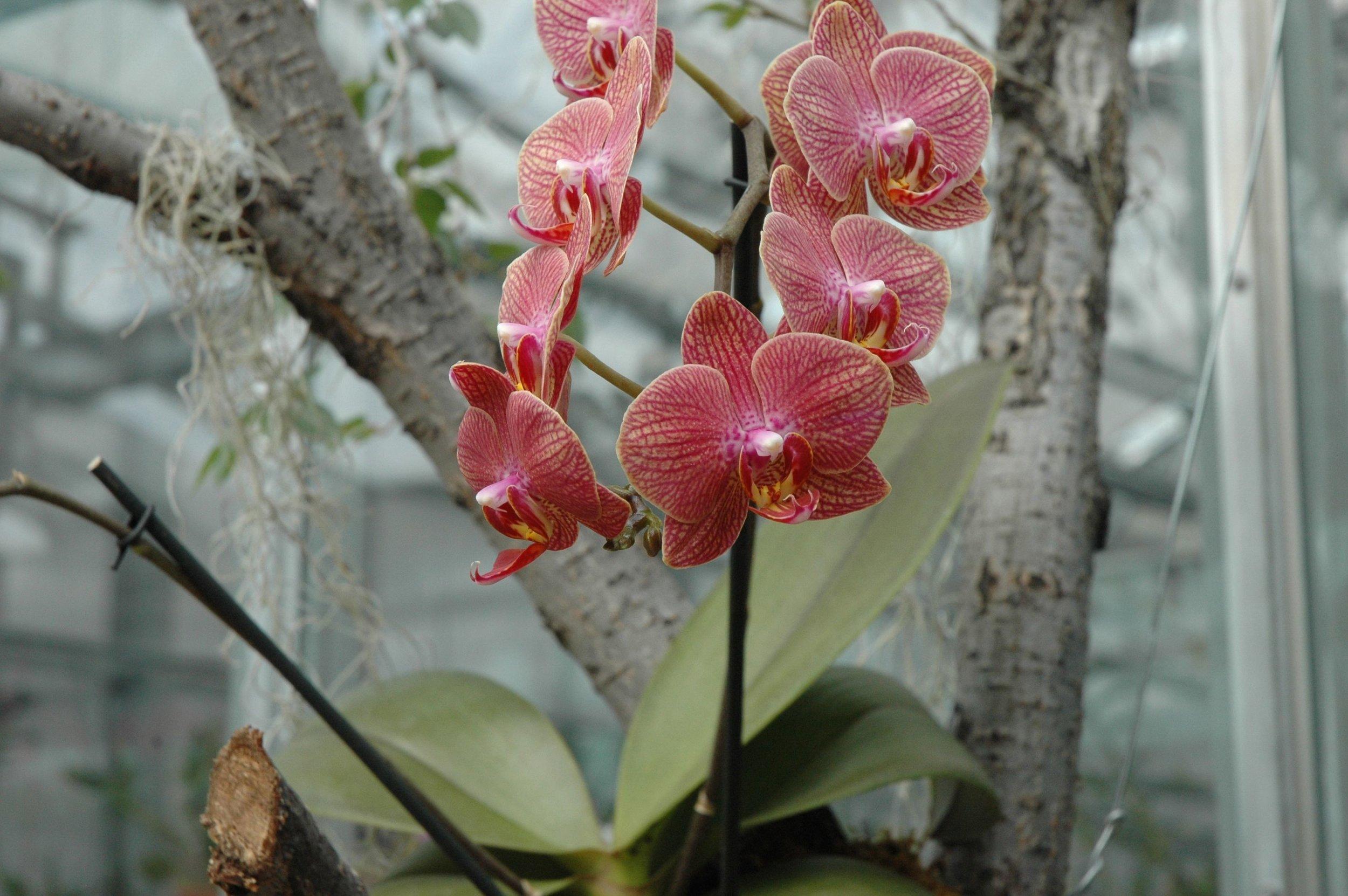 garden-orchids-pink-2.jpg