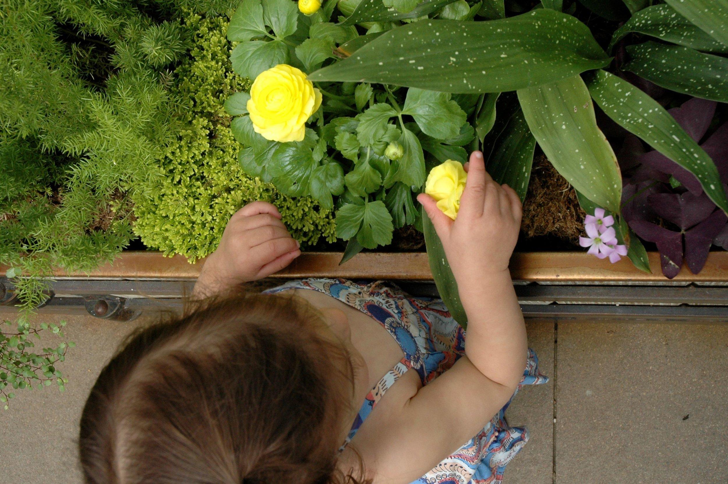 garden-green-house-2.jpg