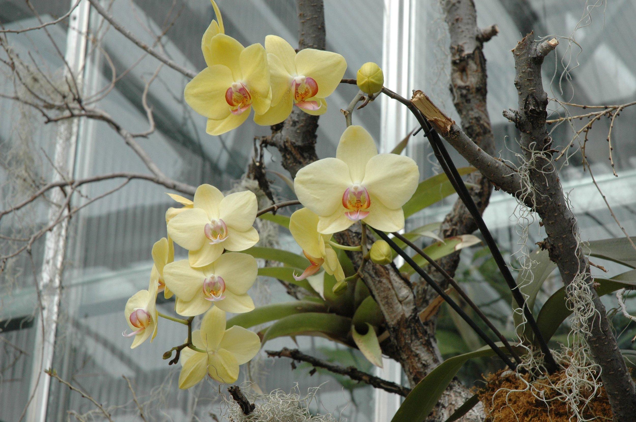 garden-orchids-yellow.jpg