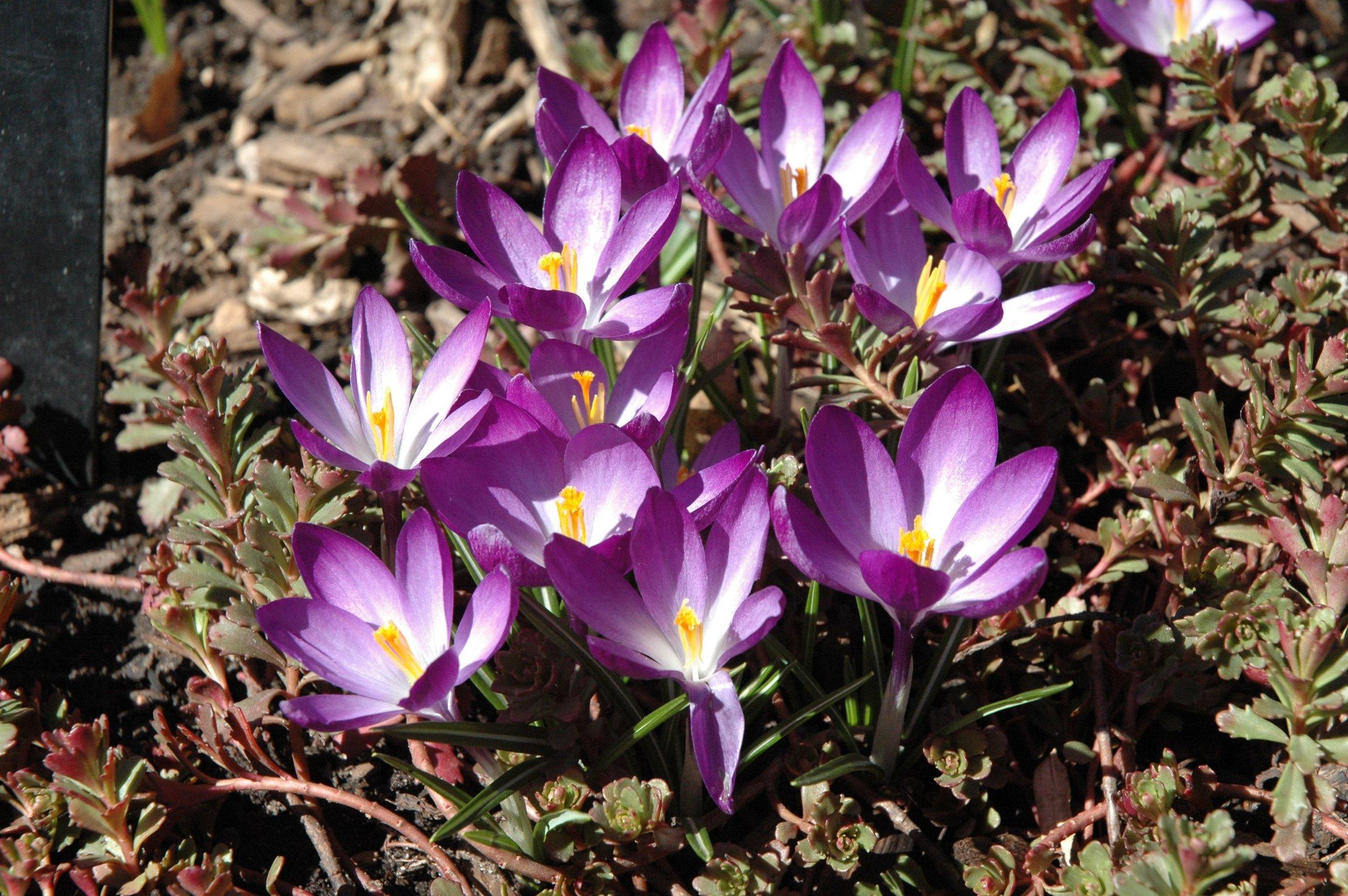 garden-flowers-purple.jpg