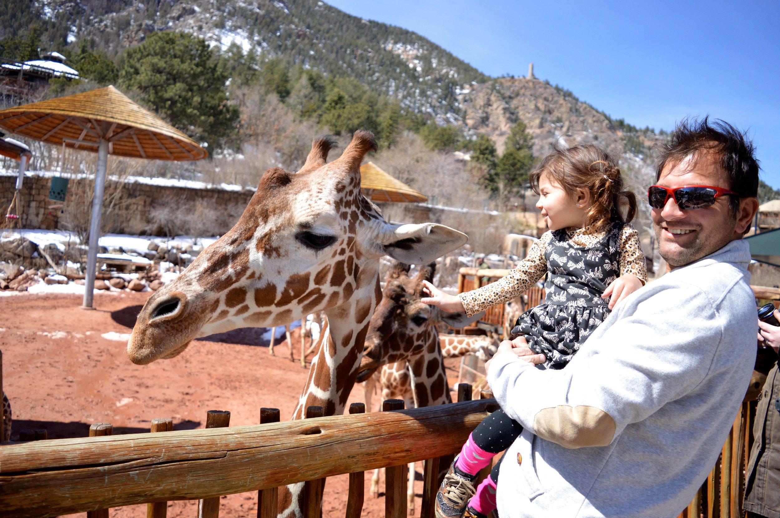 cheyenne-mountain-zoo-giraffe-3.jpg