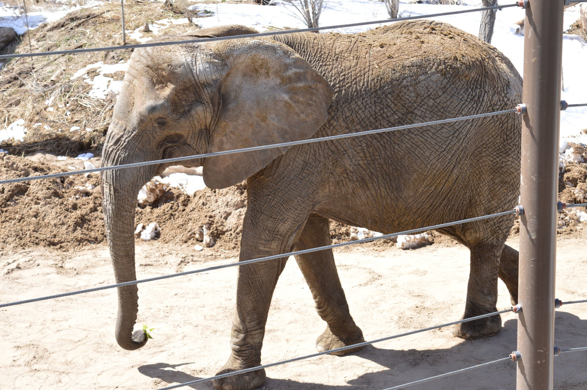cheyenne-mountain-zoo-elephant-2.jpg