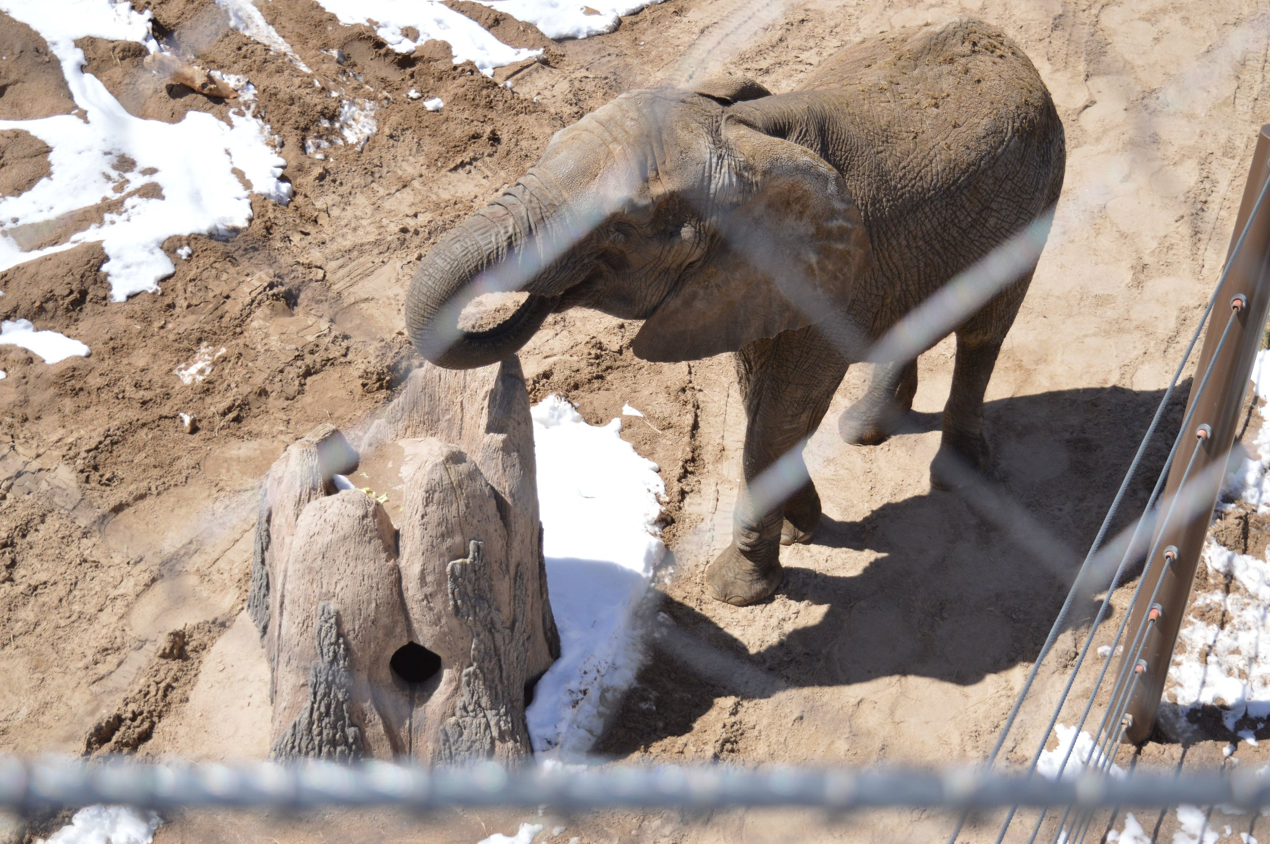 cheyenne-mountain-zoo-elephant-4.jpg