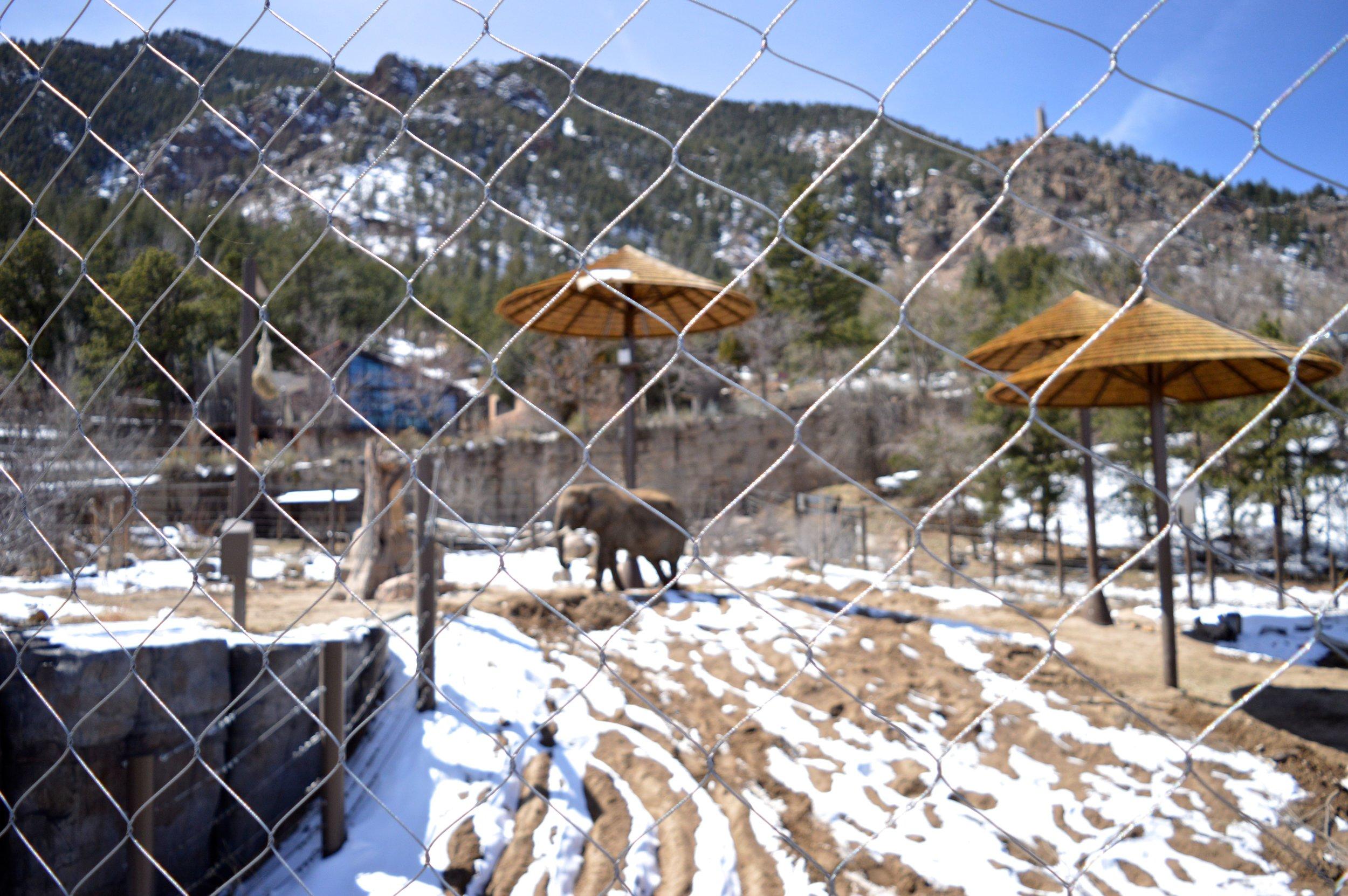 cheyenne-mountain-zoo-elephant-5.jpg
