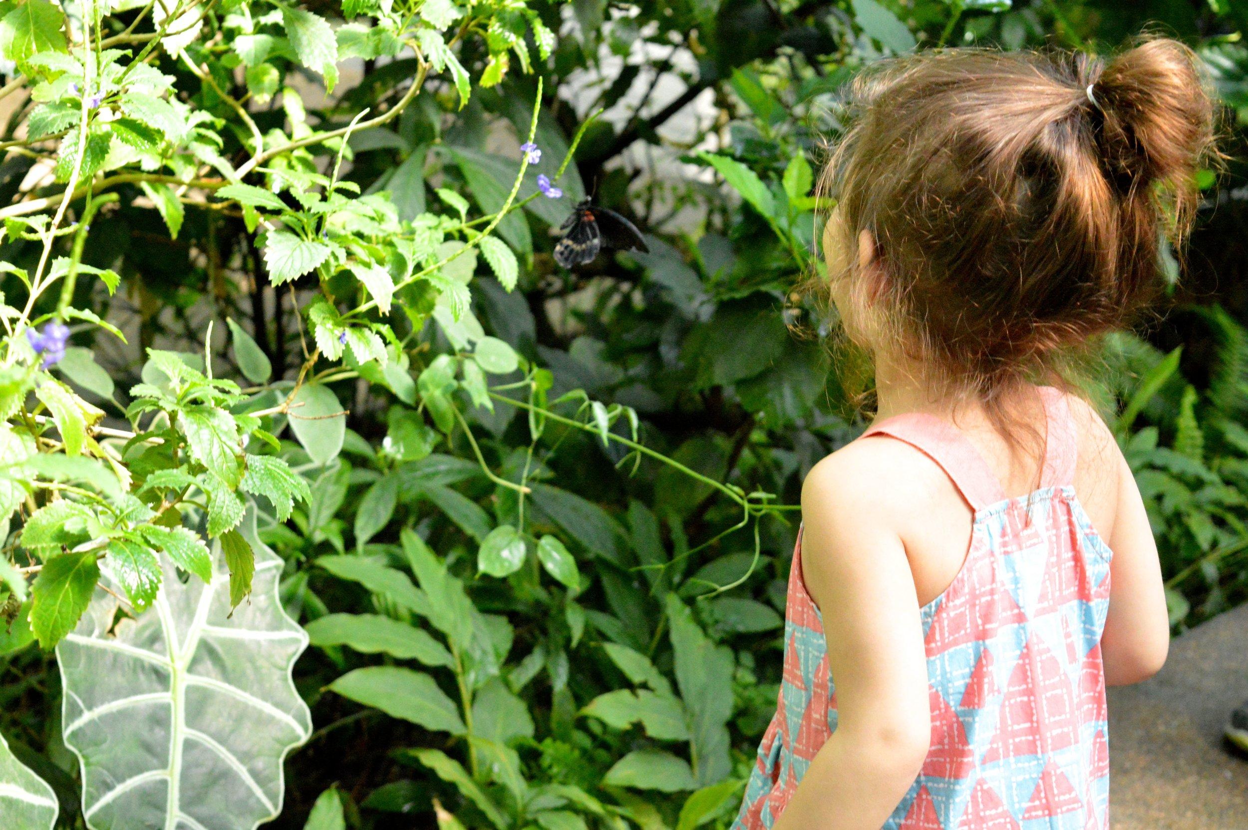 butterfly-pavilion-19.jpg