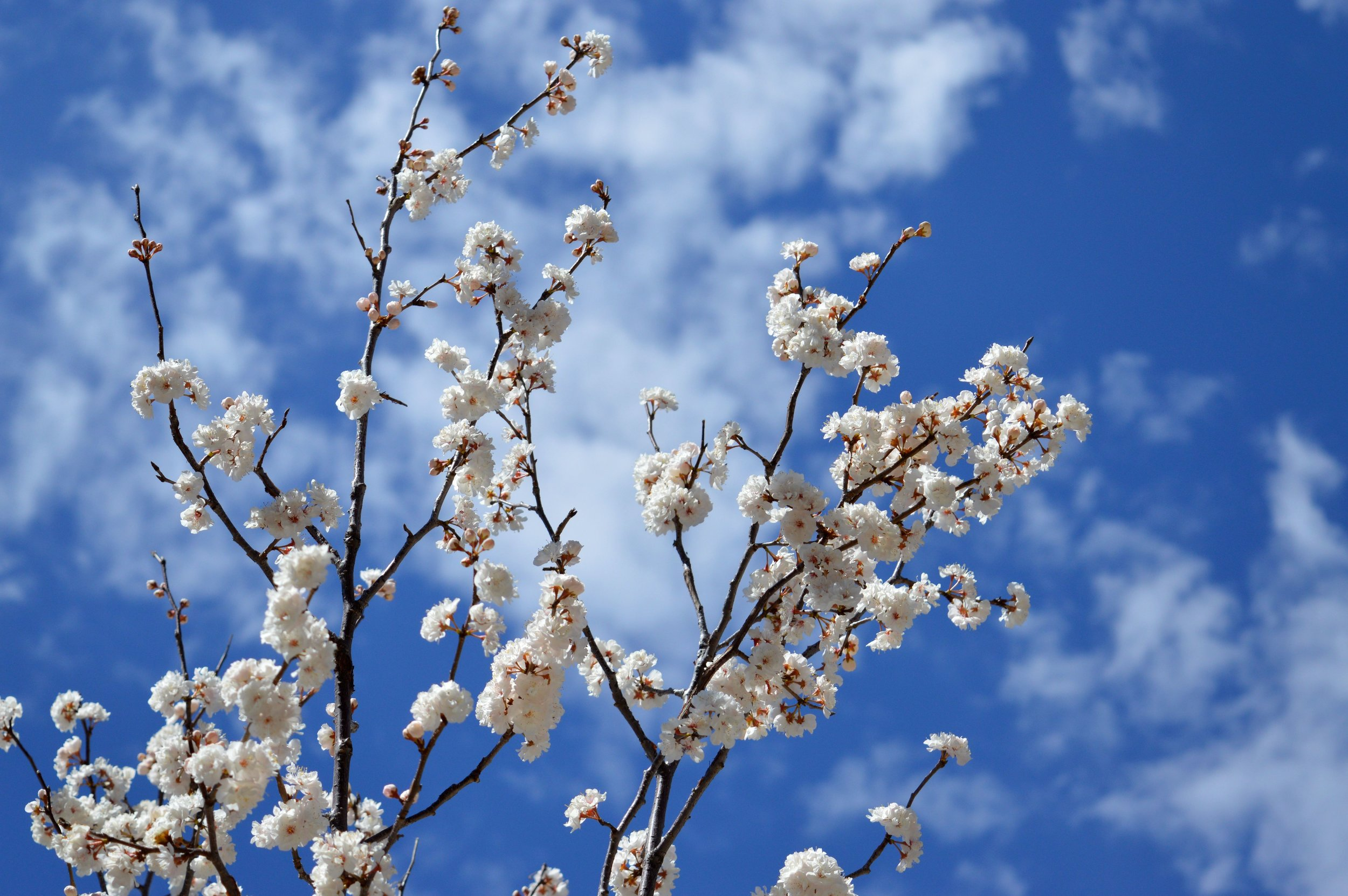 denver-botanic-gardens-April-13-7.jpg