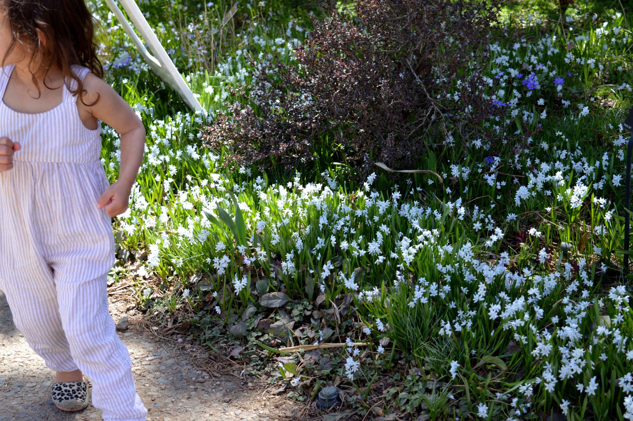 denver-botanic-gardens-April-13-5-1.jpg