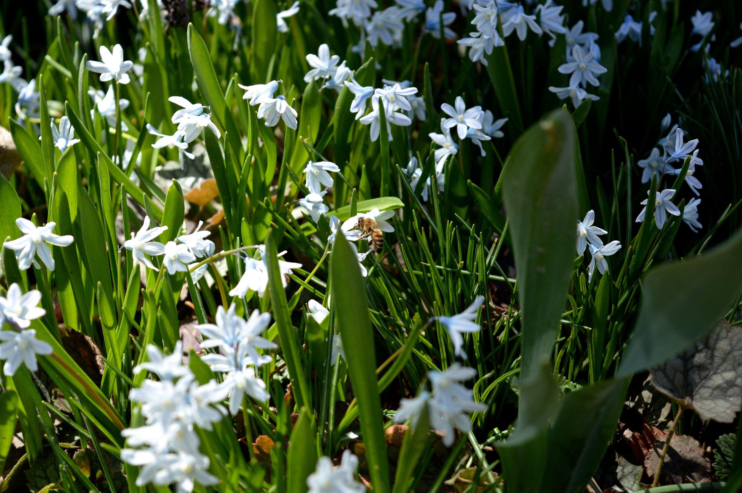 denver-botanic-gardens-April-13-6.jpg