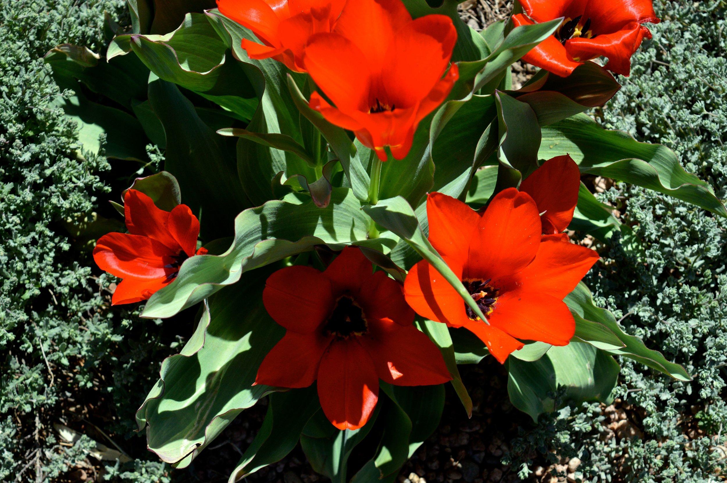 denver-botanic-gardens-April-13-16.jpg