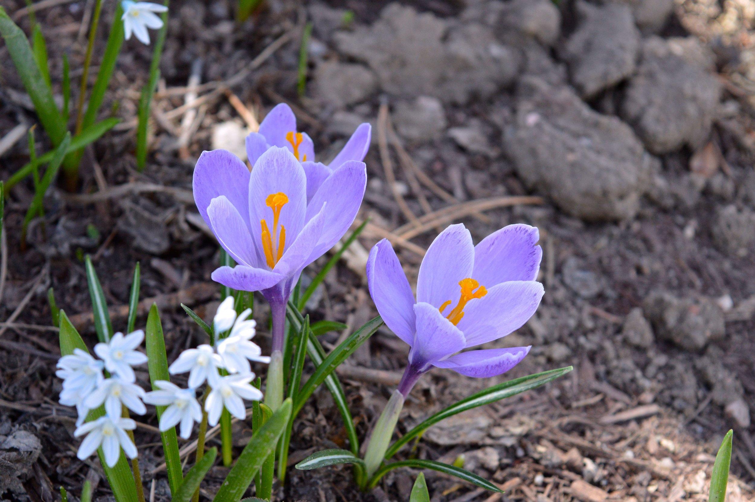 denver-botanic-gardens-April-13-6-2.jpg