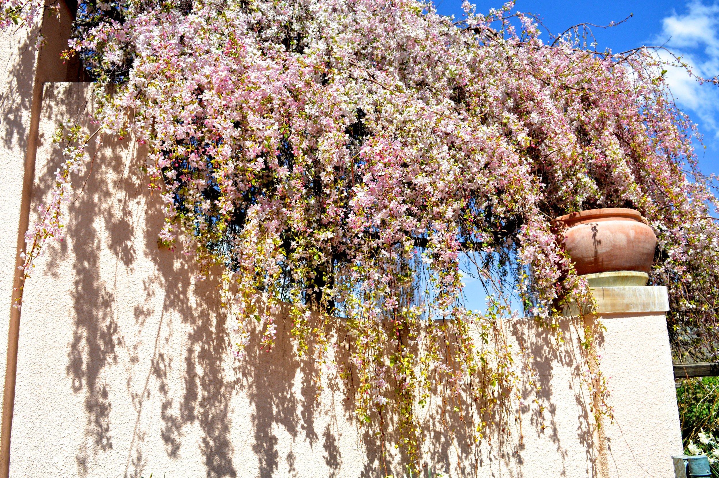 denver-botanic-gardens-April-13-24.jpg