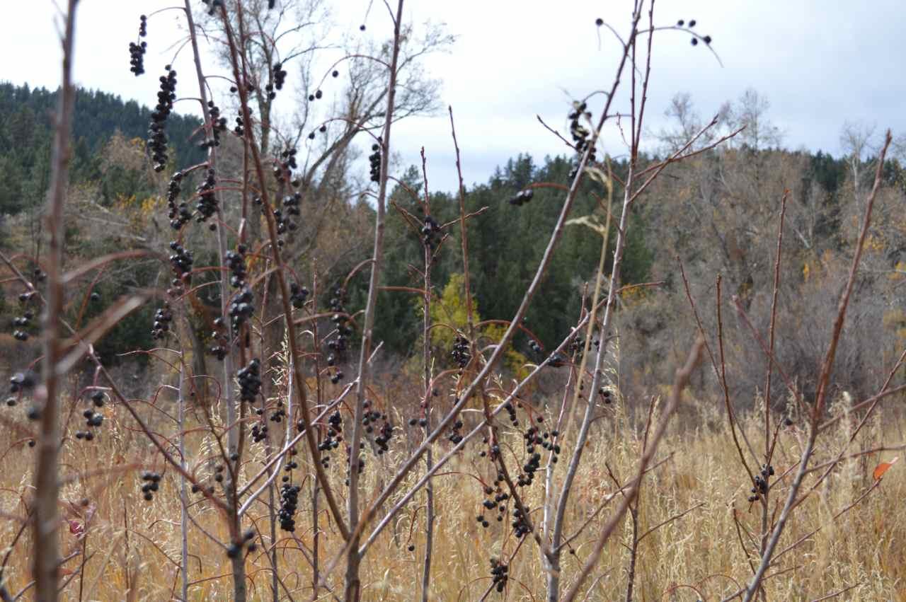 lair-o-the-bear-hike-20.jpg