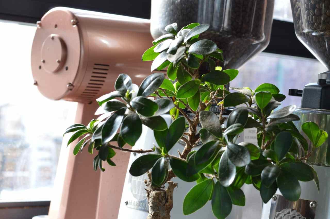 steam-espresso-bar-denver-5.jpg