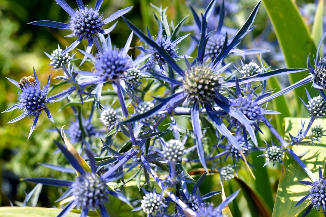 Denver-Botanic-Gardens-in-Summer-1.jpg