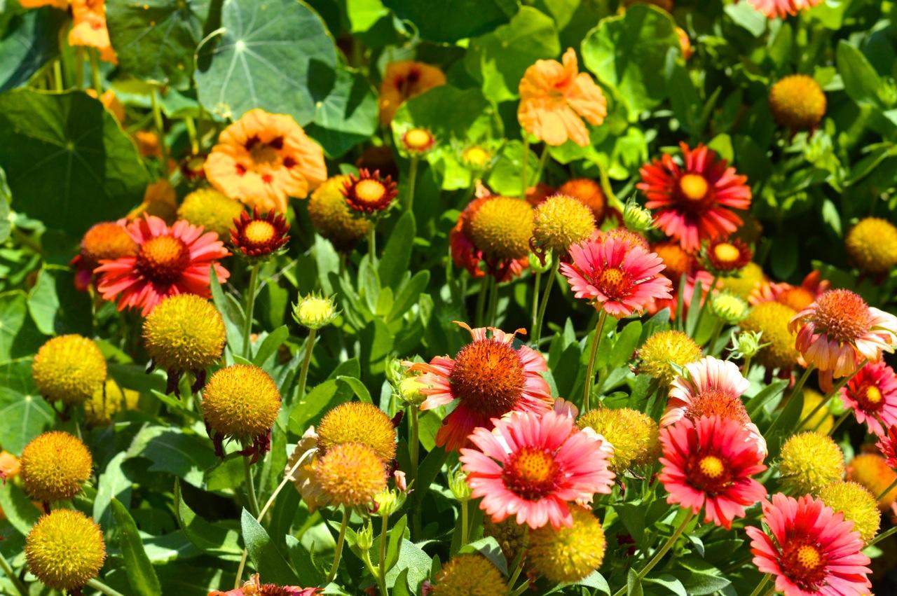 Denver-Botanic-Gardens-in-Summer-5.jpg