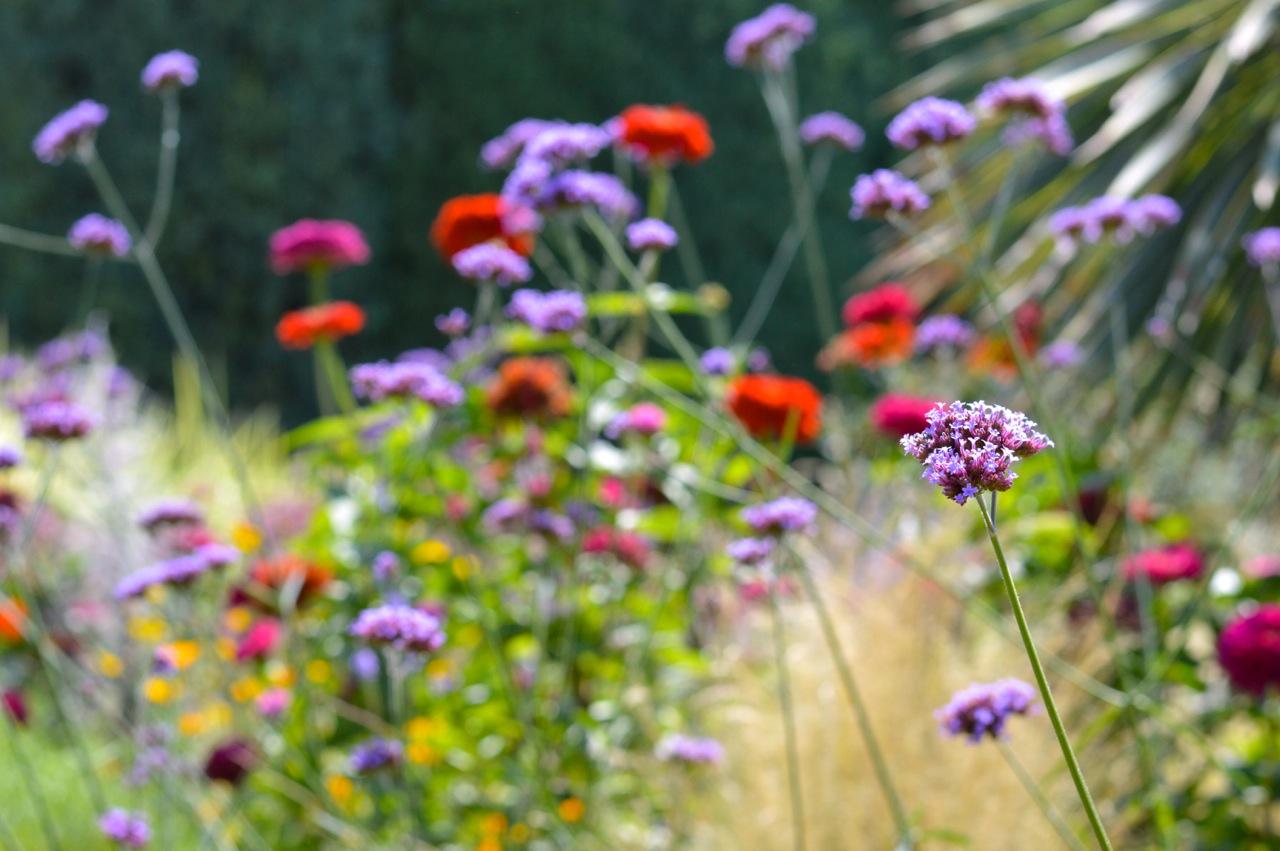 Denver-Botanic-Gardens-in-Summer-8.jpg