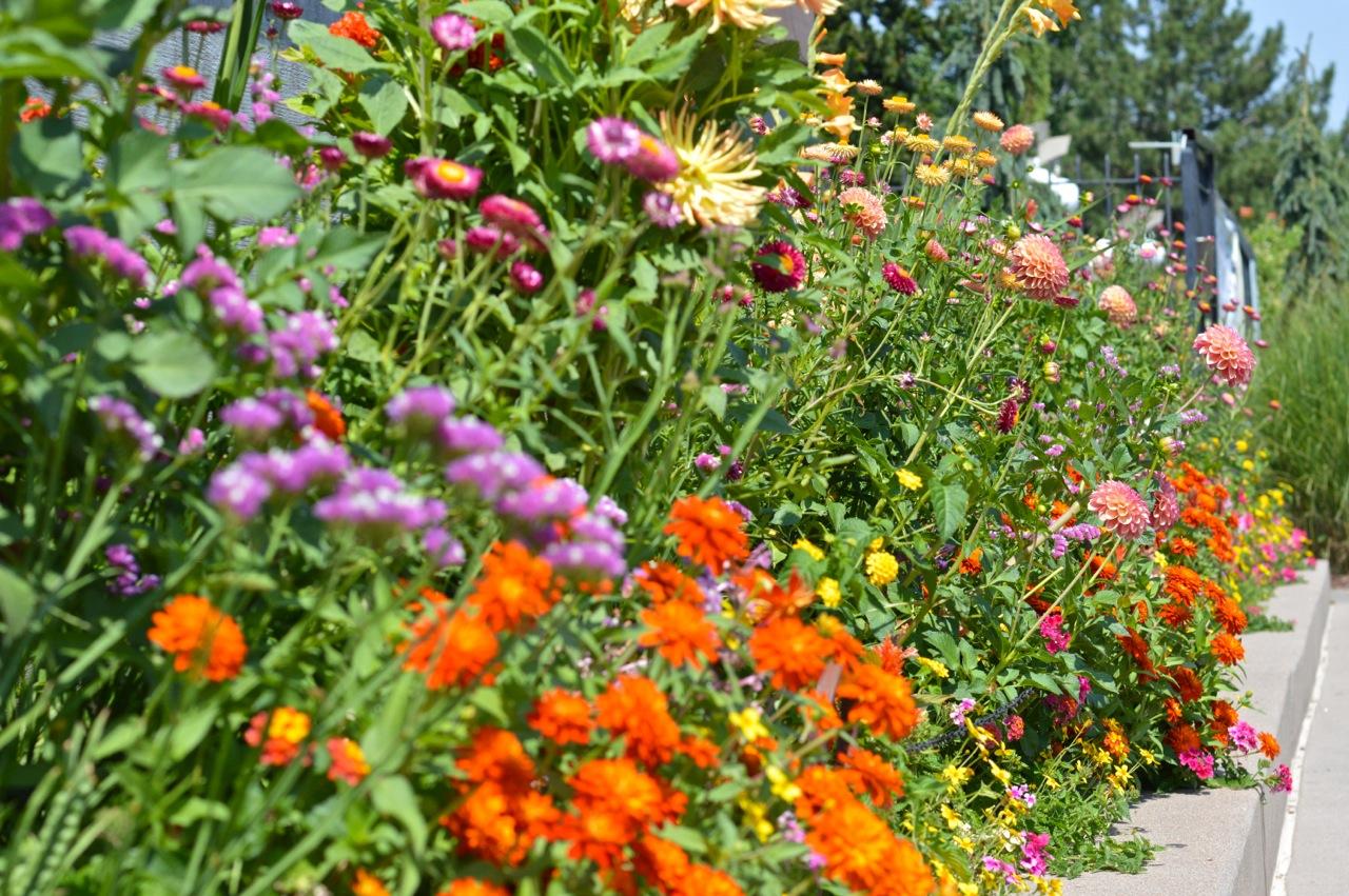 Denver-Botanic-Gardens-in-Summer-9.jpg