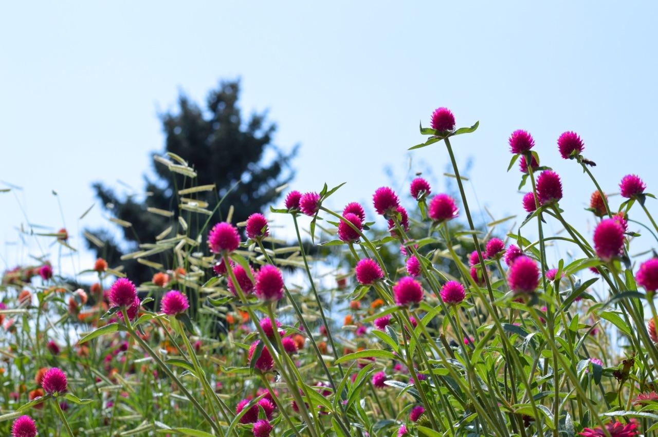 Denver-Botanic-Gardens-in-Summer-27.jpg