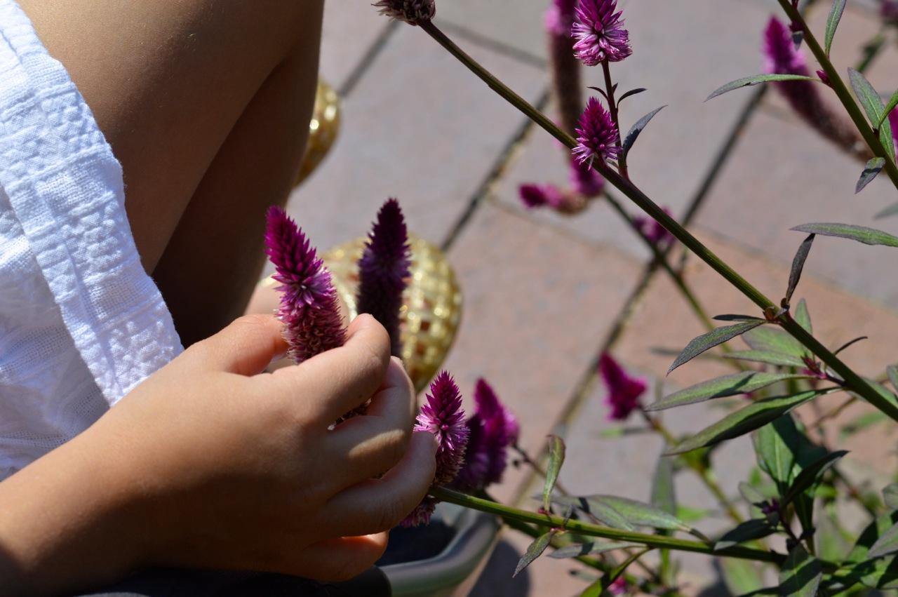 Denver-Botanic-Gardens-in-Summer-30.jpg
