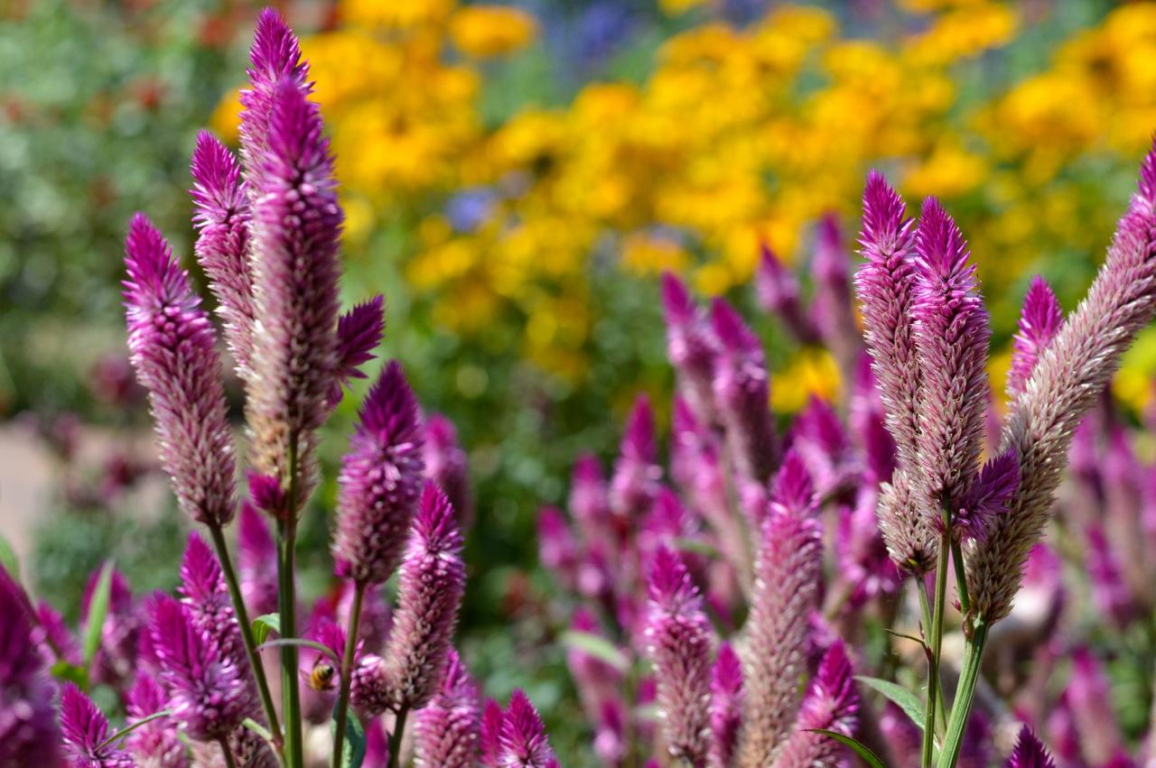 Denver-Botanic-Gardens-in-Summer-31.jpg