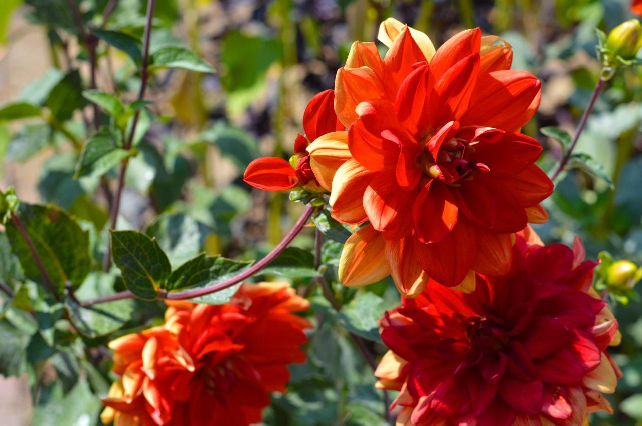 Denver-Botanic-Gardens-in-Summer-34.jpg