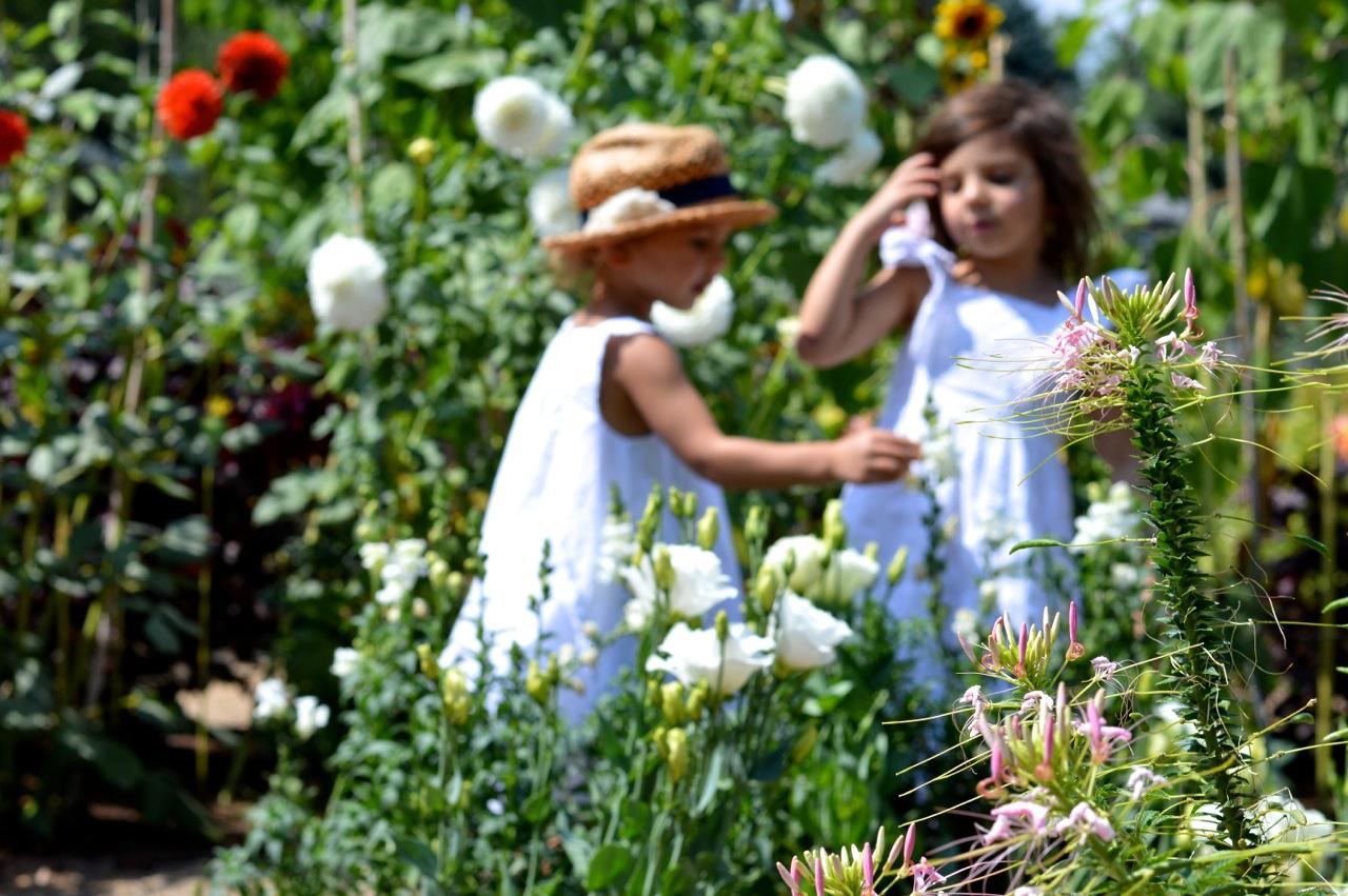 Denver-Botanic-Gardens-in-Summer-35.jpg