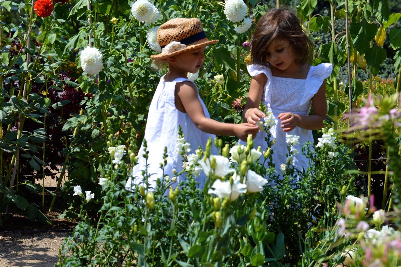 Denver-Botanic-Gardens-in-Summer-36.jpg