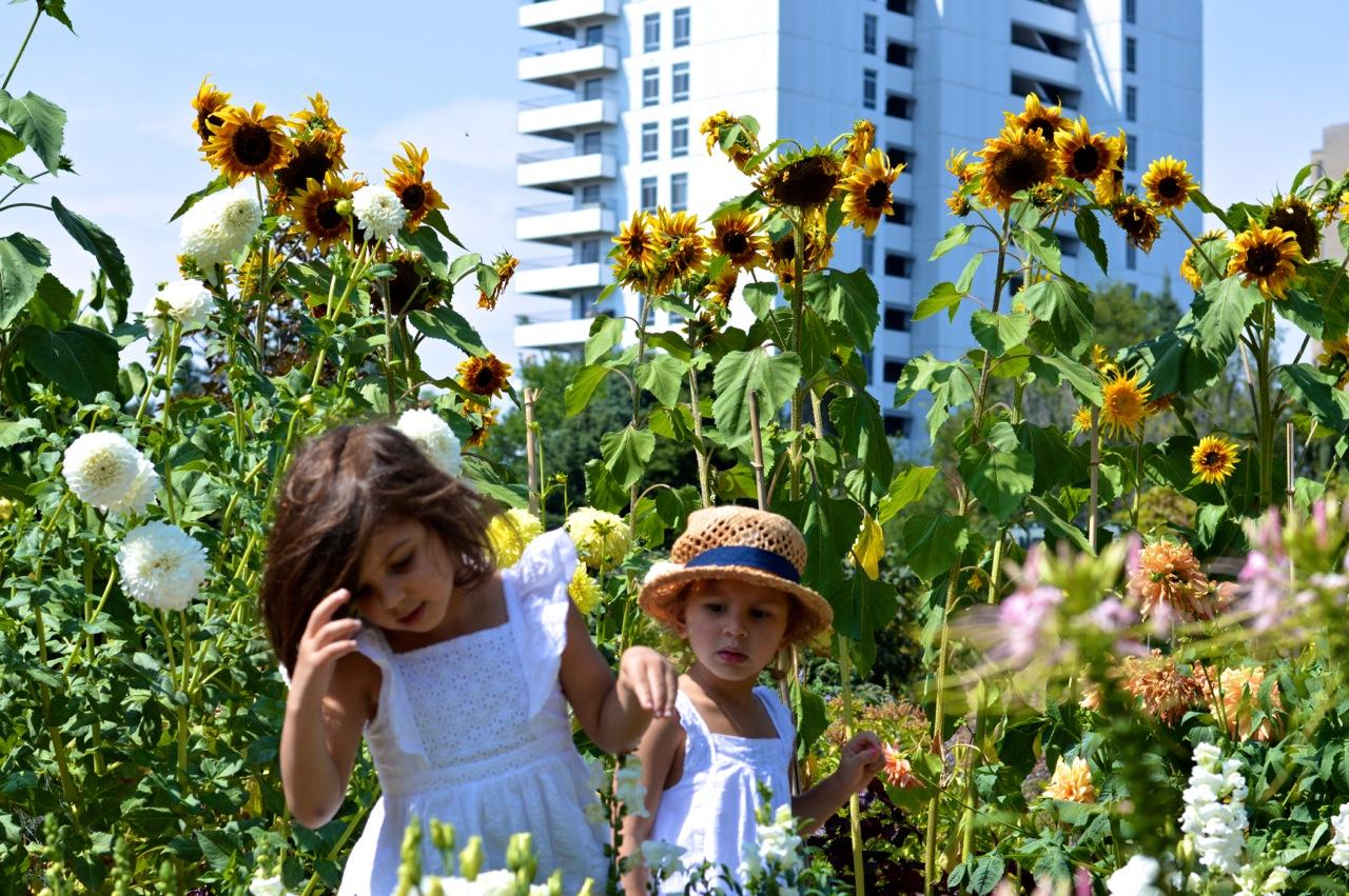 Denver-Botanic-Gardens-in-Summer-37.jpg