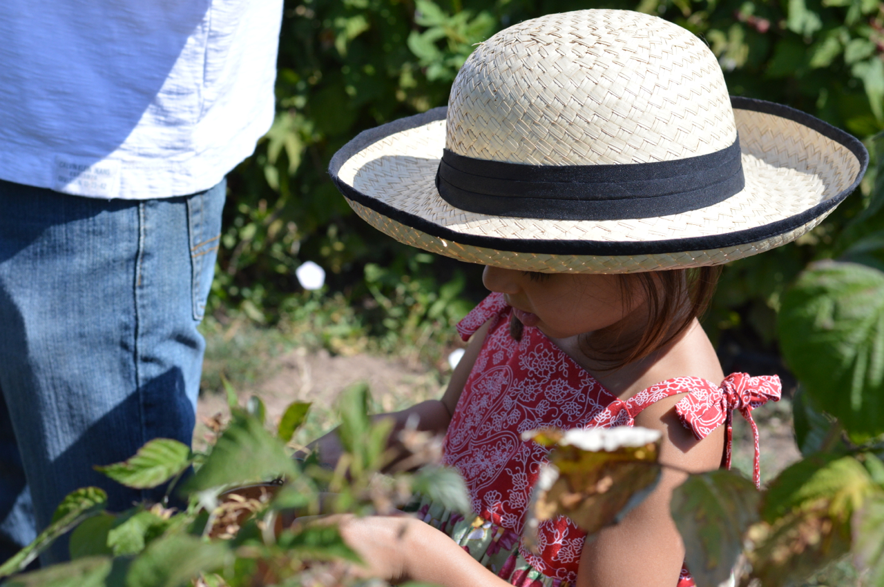 Fruit-Picking-at-Delicious-Orchards-11.jpg