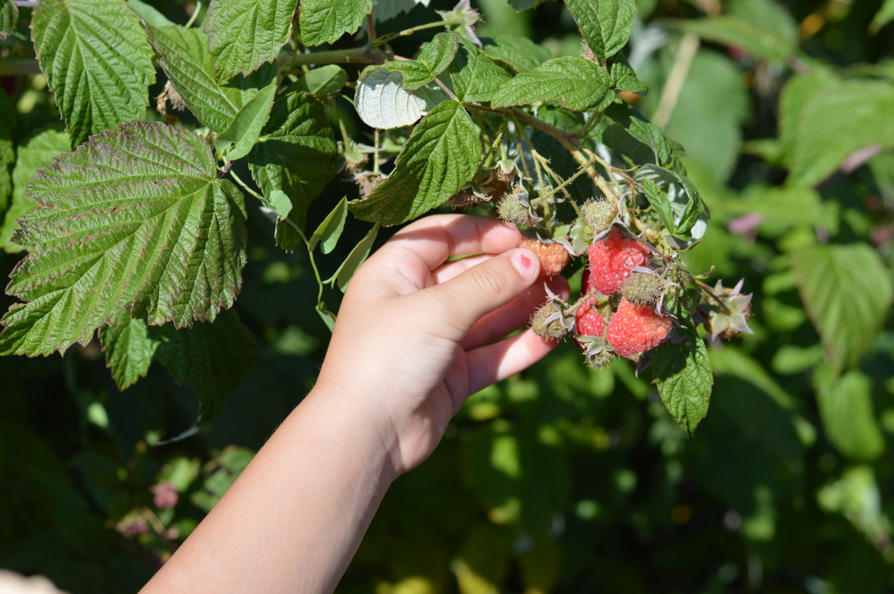 Fruit-Picking-at-Delicious-Orchards-14.jpg